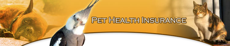 Using Multiple Pets To Find Pet Health Insurance For A Low Cost at Pet Health Care